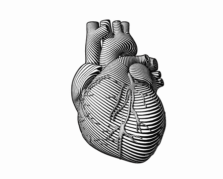 Engraving human heart with monochrome flow line art stroke isolated on white BG 向量圖像