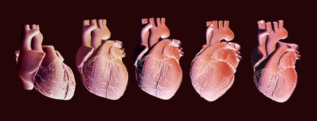 Human heart illustration in various view with wireframe triangular on dark background