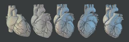 Coeur humain de vecteur dans le style d'ombrage 3D avec filaire triangulaire dans divers points de vue et éclairage isolé sur fond gris