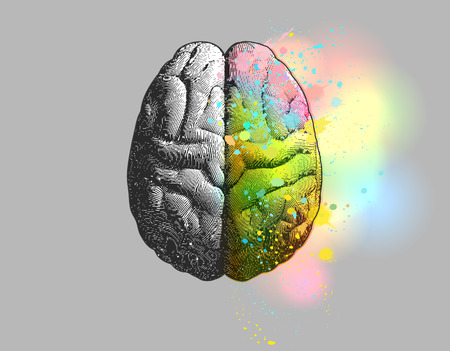 Creative concept of Left and right brain illustration with colorful on right side isolated on gray background