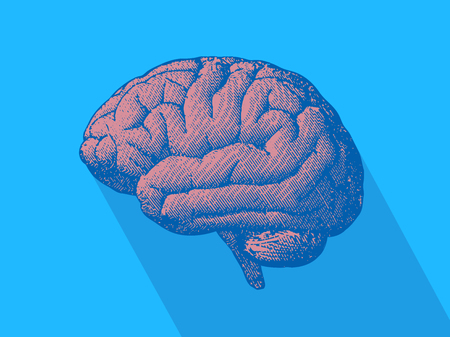 Side view brain engraving drawing in monochrome on light blue background