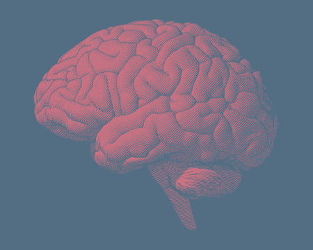 Red pink engraving brain illustration in side view isolated on blue background Illustration