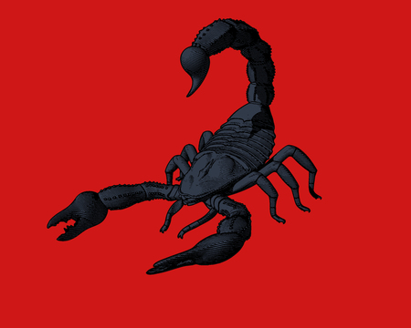Dark blue scorpion engraving in monochrome isolated on red background