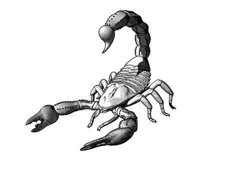 Scorpion engraving drawin in monochrome isolated on white background Иллюстрация