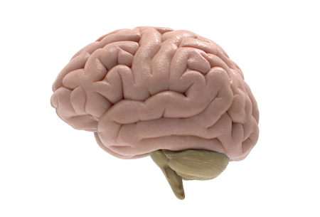 3D brain rendering in side view isolated on white background with clipping mask for use in any background