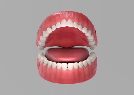 Tooth gum and tongue 3D render illustration on gray background with clipping path for use in any backdrop