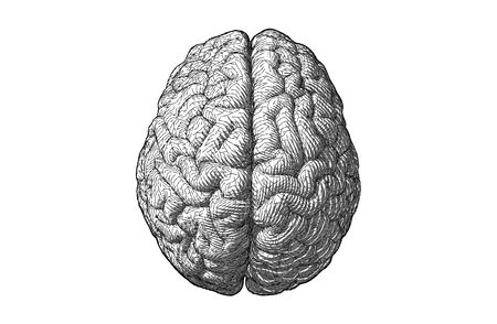 Monochrome engraving drawing brain illustration with geometric line style in top view isolated on white background