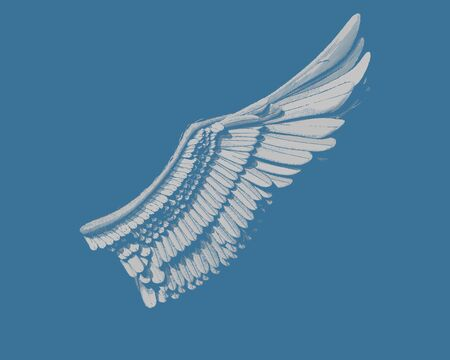 Wing engraving drawing in gray color illustration  isolated on dark blue background Vectores