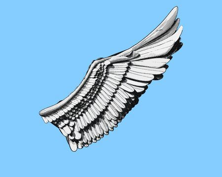 Wing engraving drawing in black and white color illustration  isolated on light blue background Vectores