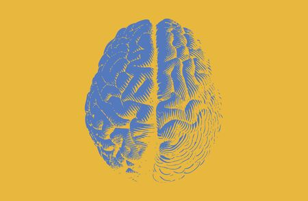 Blue engraving brain illustration in top view isolated on yellow background Vektorové ilustrace