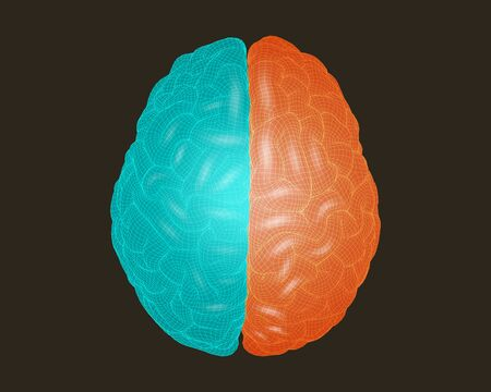 Brain wireframe illustration top view point with left and right separated color concept in translucent shader