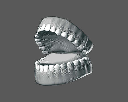 Tooth and gum black and white engraving drawing perspective oblique side view high contrast lighting isolated on gray background Ilustração