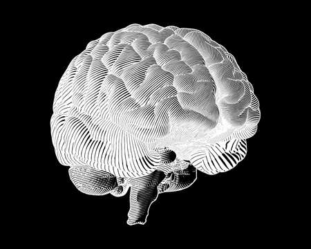 White engraving brain illustration in perspective side view isolated on black background