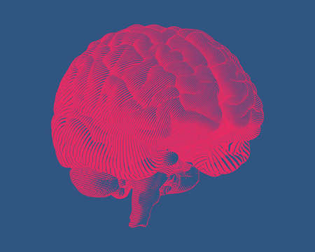 Bright red engraving brain illustration in perspective side view isolated on dark blue background Ilustrace