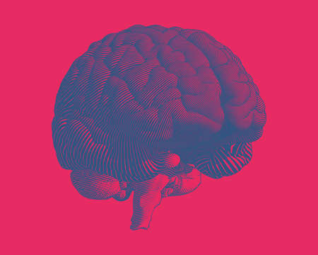 Deep blue engraving brain illustration in perspective side view isolated on pink red background