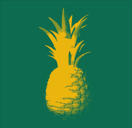 Yellow engraving pineapple illustration isolated on green background