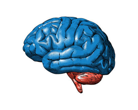 Blue and orange retro vintage engraving drawing human brain side view isolated on white background Ilustrace