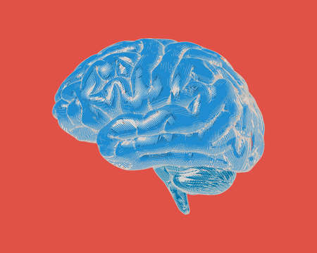 Blue vintage engraving woodcut drawing human brain side view isolated on red background