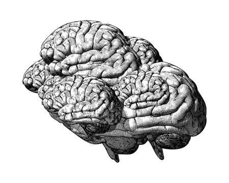 Monochrome black engraving drawing of many human brains overlap illustration on white background