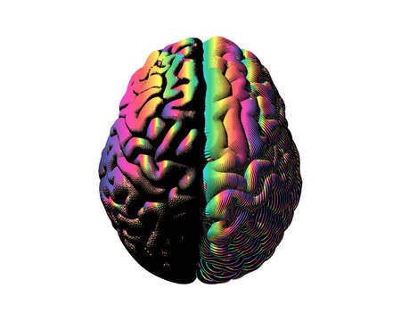 Human brain hemispheres rainbow color left and right brain engraving in top view illustration isolated on white background