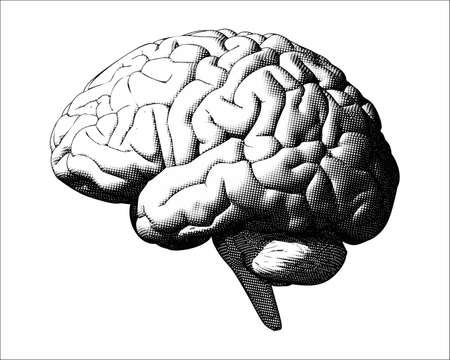 Monochrome vintage engraving crosshatch drawing human brain illustration in side view isolated on white background