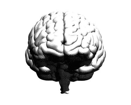 Monochrome vector engraving crosshatch drawing human brain front view illustration isolated on white background Ilustrace