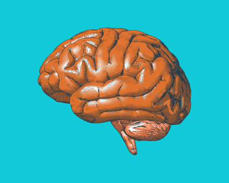 Orange retro vintage engraving drawing brain isolated on blue turquoise background