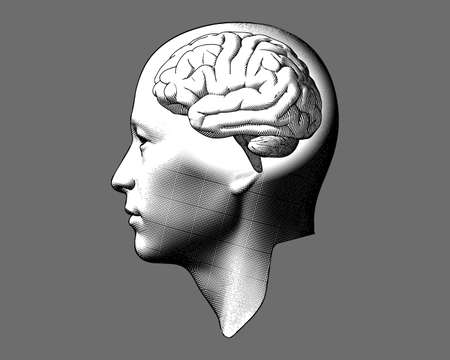 Monochrome engraving drawing human head with brain inside illustration isolated on gray background