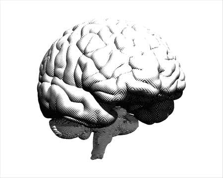Monochrome engraving crosshatch human brain perspective front view illustration isolated on white background Ilustrace