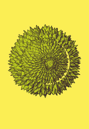 Colorful green engraving drawing cutting durian fruit on top view illustration isolated on bright yellow background