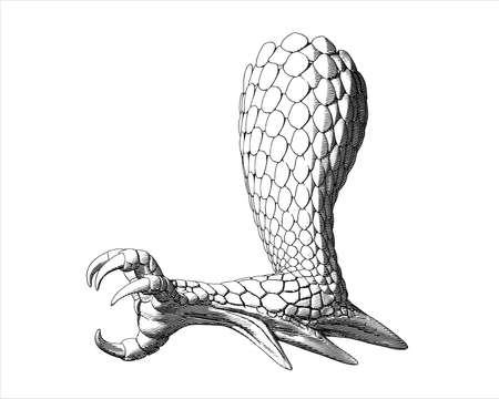 Monochrome Fantasy dragon claw vintage engraving drawing illustration side view isolated on white background Illusztráció