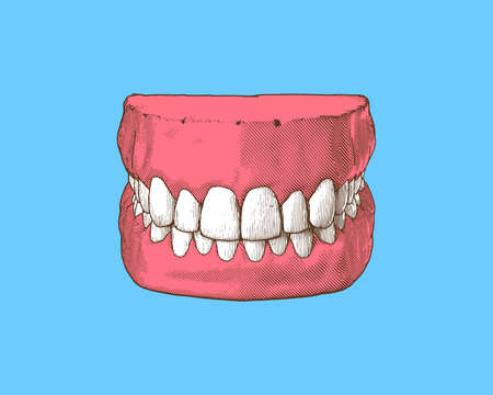 Colorful vintage engraved drawing tooth and gum close jaw represent for dental occlusion in top front view illustration isolated on light blue background Stock Illustratie