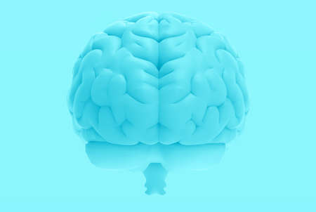 3D rendering illustration human brain left and right cerebral isolated on blue template background in back view with clipping path for die cut to layout on any backdrop 写真素材