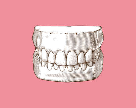 Monochrome vintage engraved drawing tooth and gum close jaw represent for dental occlusion in top front view illustration isolated on pastel pink background Stock Illustratie