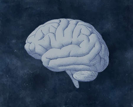 Vintage Engraved drawing brain side view vector illustration isolated on old textured blackboard background