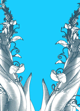 Monochrome engraved vintage drawing beanstalk worm eye view growing illustration isolated on blank blue background