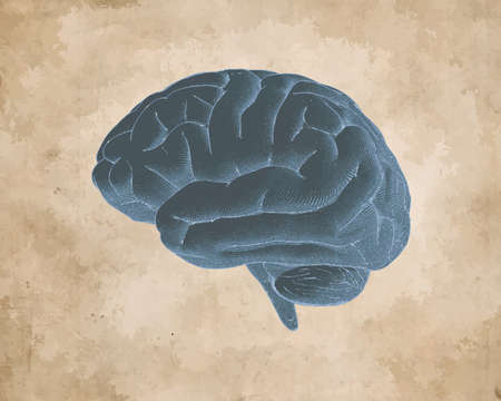 Vintage Engraved drawing negative brain side view vector illustration isolated on sepia old textured paper background