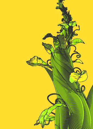 Colorful engraved vintage drawing beanstalk worm eye view growing illustration isolated on blank yellow background 矢量图像
