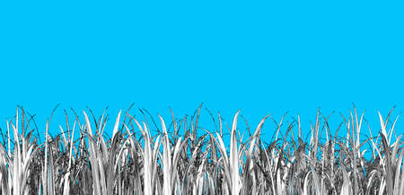 Monochrome engraved vintage drawing grass weed foreground group illustration isolated on blue background