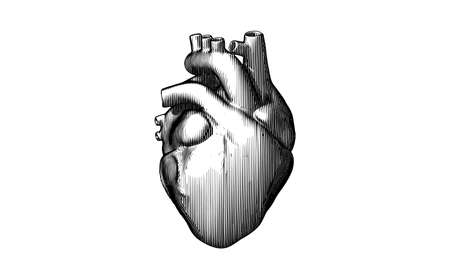 Monochrome black engraved vintage drawing organ human heart vector illustration isolated on white background