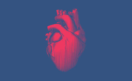 Bright red engraved vintage drawing organ human heart vector illustration isolated on deep blue background