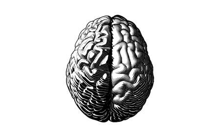 Monochrome engraved drawing human brain with different style of left and right cerebral hemispheres vector illustration isolated on white background