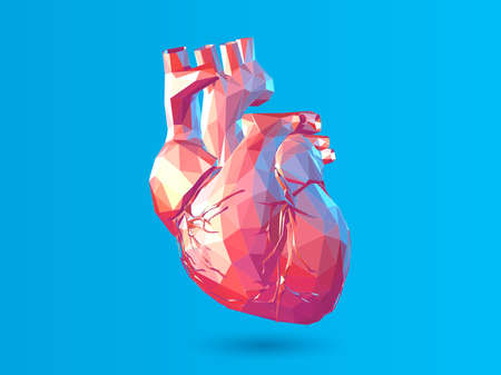 Colorful abstract low poly human internal organ heart vector illustration isolated on blue background