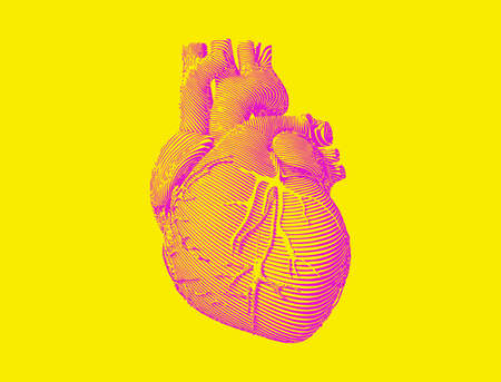 Bright pink graphic engraved drawing abstract organ human heart in vector illustration isolated on yellow background Ilustrace