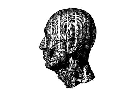 Monochrome vintage engraved drawing abstract anatomical human head textured vector illustration art isolated on white background