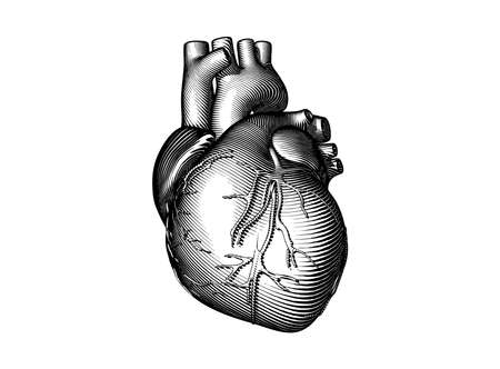 Monochrome vintage engraved drawing abstract organ human heart in vector illustration dark woodcut style isolated on white background
