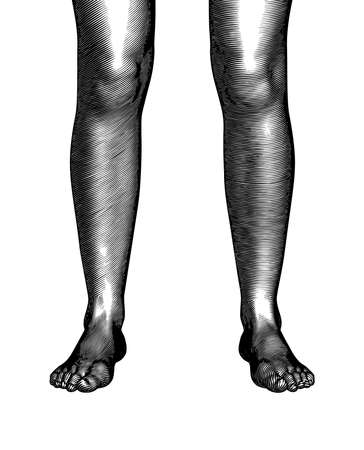 Monochrome vintage engraved drawing abstract pair of human leg and feet vector illustration front view isolated on white background dark shade woodcut style