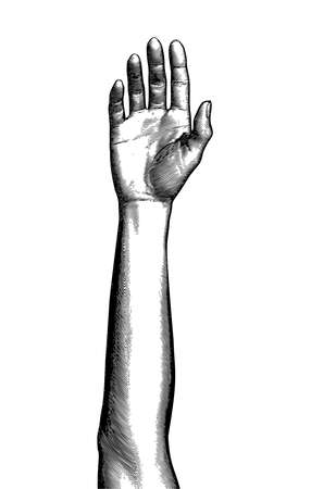 Monochrome vintage engraved drawing raised up human female hand vector illustration forearm front view isolated on white background Ilustrace