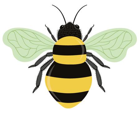 Bumble Bee Vector Illustration Isolated on White Background Çizim