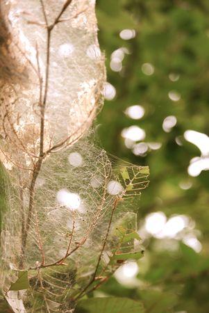 Bag Worm Nest